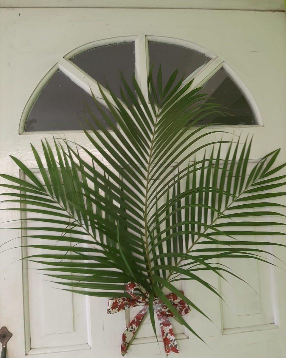 Jamaican Palms